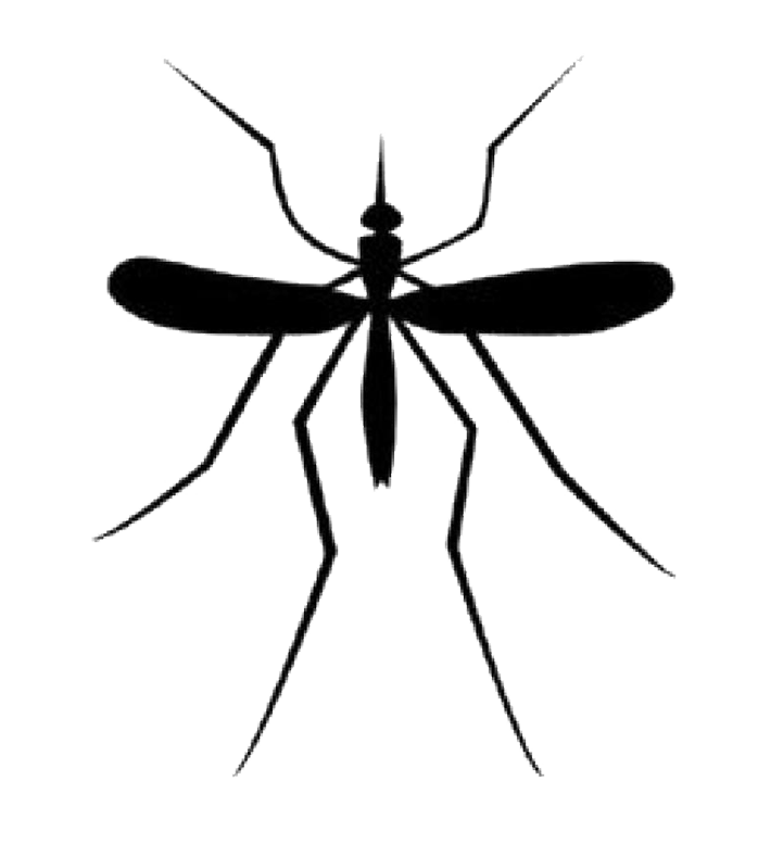 Mosquito_Good.png